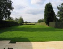 Dometsic lawn at Humberston Avenue. Picture taken only 3 weeks from completionof seeding works in previous photo.